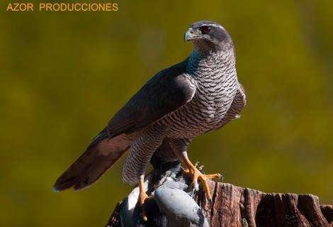 PEDN, nuevo colectivo en favor de la Producción Española de Documentales de Naturaleza