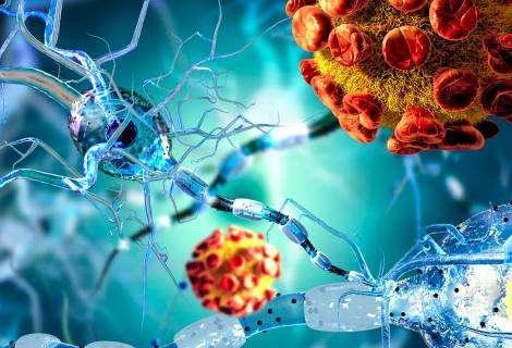 La melatonina, guardián del cerebro frente al coronavirus
