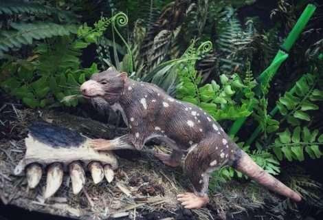 Descubren nuevo mamífero de la era de los dinosaurios