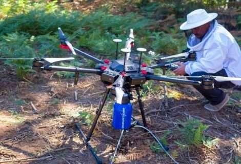 Drone Velutina: sistema más seguro contra la avispa asiática