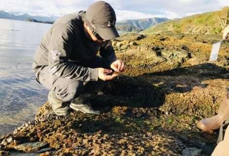 Científico chileno fue premiado por proyecto de algas pardas