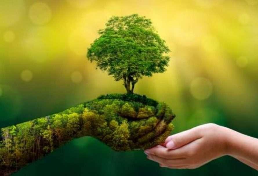 HP y Conservation International restauran la selva amazónica